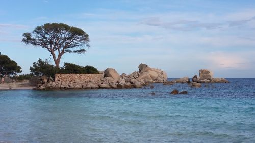 pine beach corsican