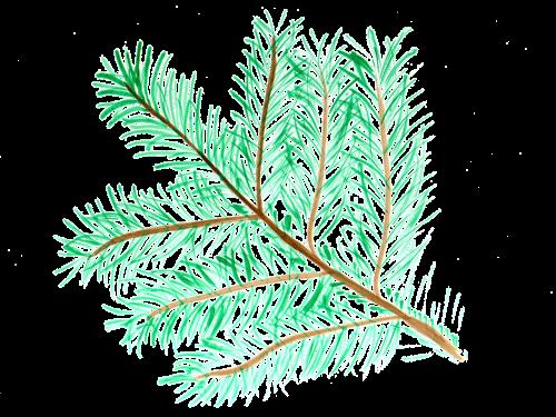 pine branch watercolor