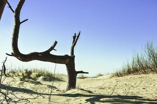 pine  beach  dunes