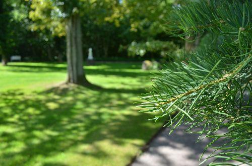 pine pine needles needles