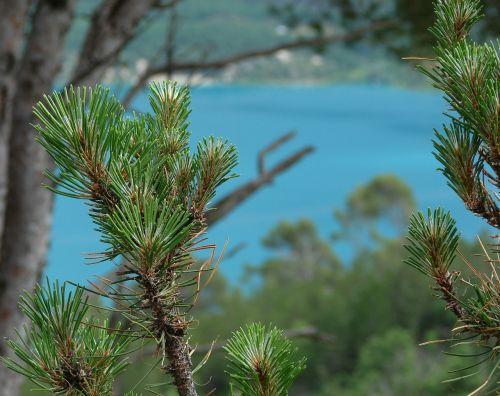 pine provence lake