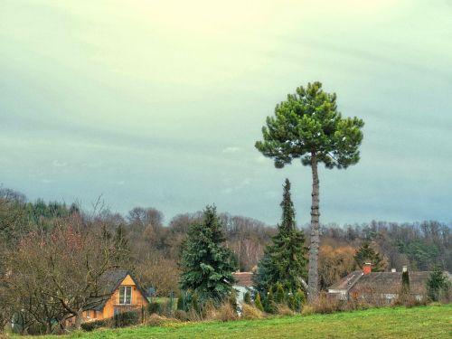 pine village idyll