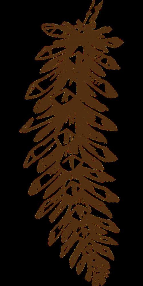 pine cone cone brown