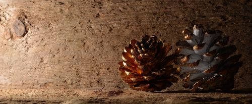 pine cones wood background