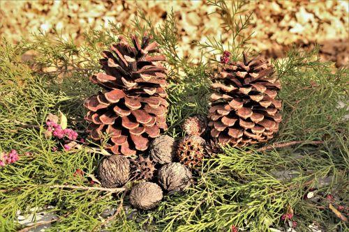 Pine Cones And Cedar