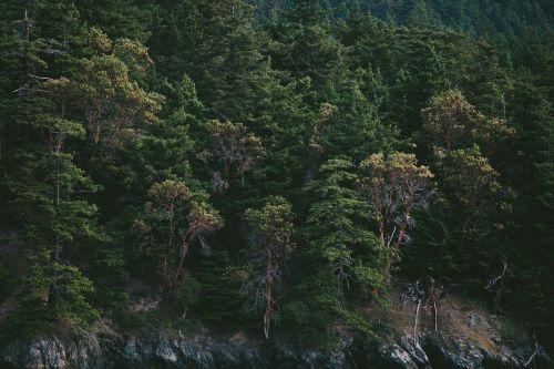 pušys,eglės,miškas,kalnai,pušys,eglės,beržas,eglė,pušis,žalias,medžiai,krūmas,visžalis,filialai,bagažinė,mediena,spygliuočių,gamta,Eglė,dykuma,laukiniai,natūralus,aplinkosauga,tekstūra,lauke,augti,parkas,sodrus,ekologinis,ekologija,mediena,medžiai,medžių viršūnės,miškas,tvarus,žievė,augimas,Nacionalinis parkas,augmenijos raumenys,kalvos