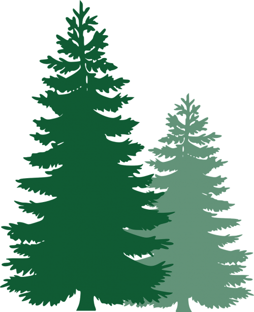pine trees spruce trees evergreen trees