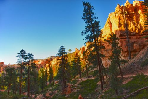Pine Trees Over Hiking Trail