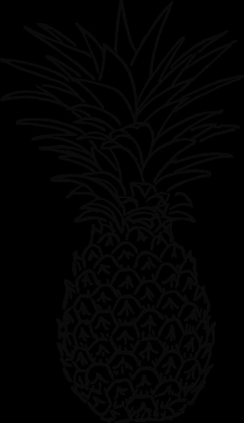 pineapple fruit tropic