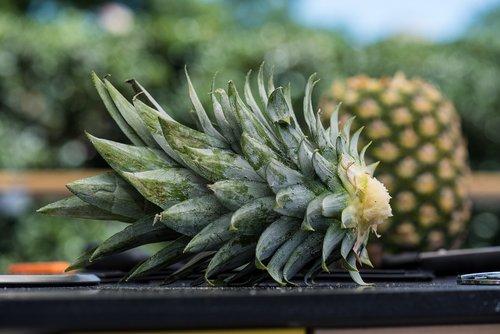 pineapple  farmers market  produce