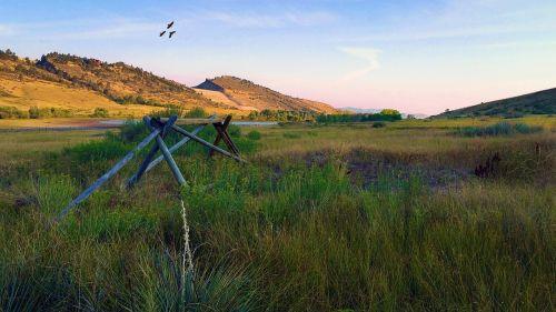 pineridge natural area hawk flight