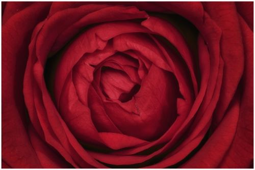 red flower summer