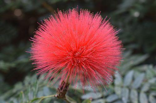 pink peach fuzzy