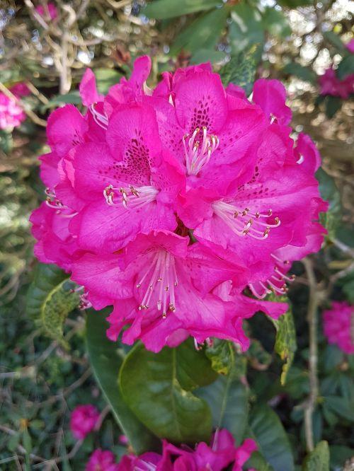 pink vibrant flower
