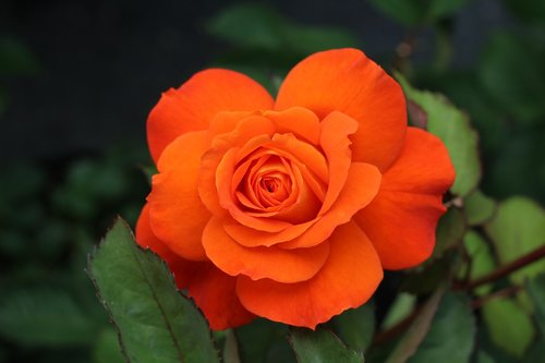 pink  orange  nature