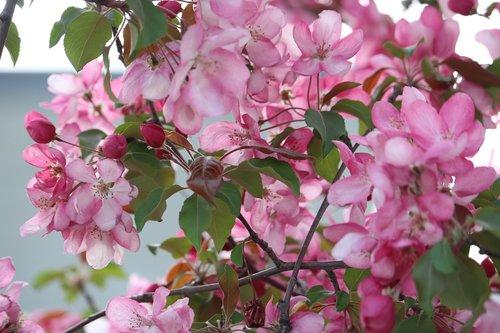 pink  flower  pink flowers