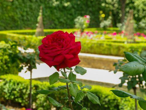 pink garden of alhambra grenade