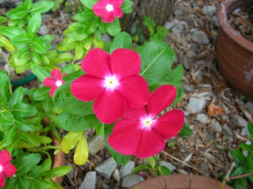 pink pink flower pink flowers
