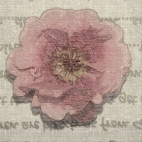 pink moss rose words