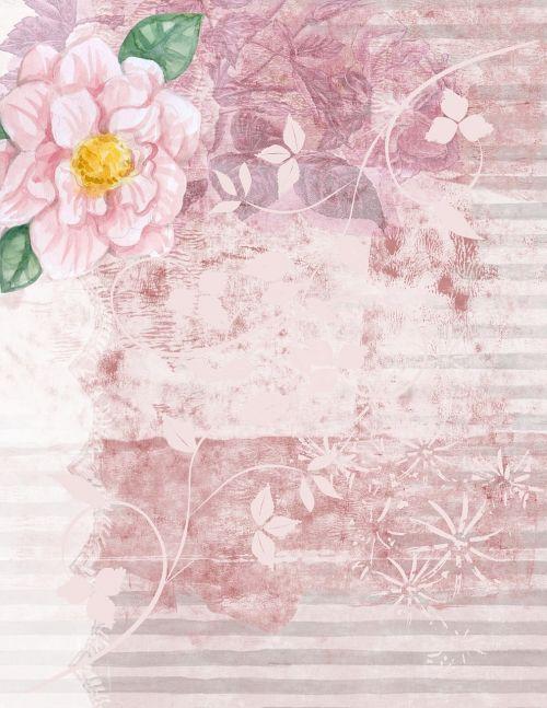 pink background backdrop rose