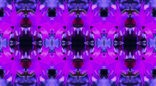 Pink Crab Claw Flower Pattern