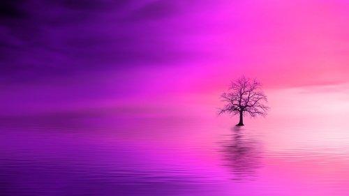 pink dawn  tree  ocean