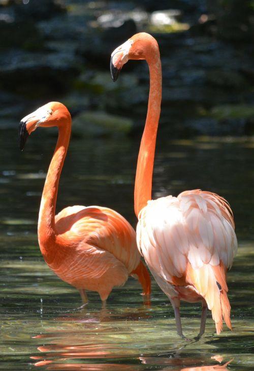 pink flamingo philadelphia zoo birds
