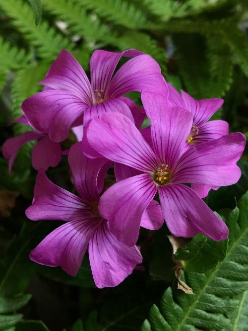 pink flower pink petals pink