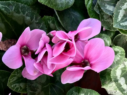 pink flower  pink petals  flower