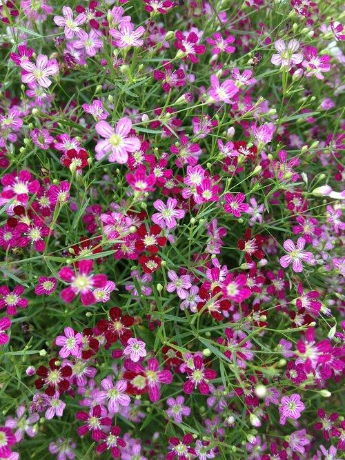pink flower  flowers  macros