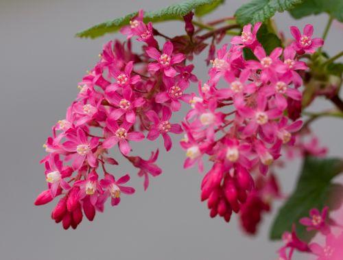 Pink Flower Blooms Macro