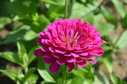 pink flower fuchsia nature bouquet