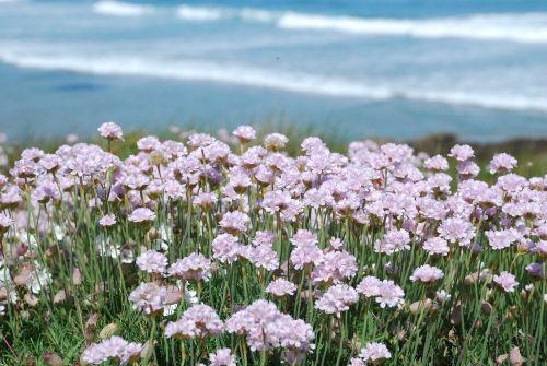 pink flowers pink flower spring