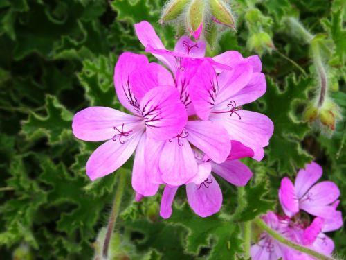 Pink Garden Flora