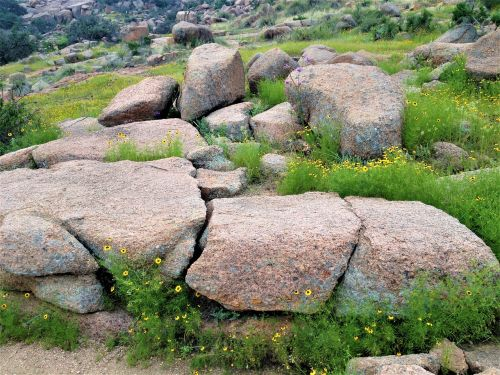 pink granite wild flowers enchanted rock texas