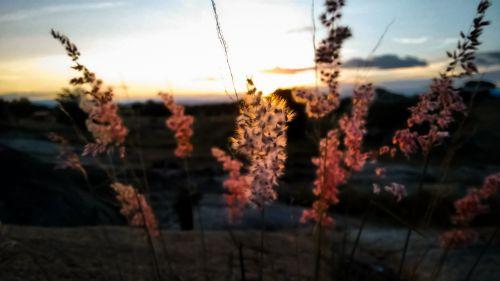 gėlė, rožinis, makro, dangus, saulės šviesa, rožinė makro