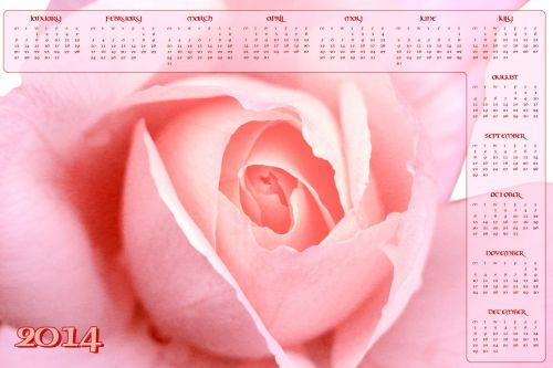 Pink Rose Calendar 2014