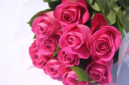 pink roses  bunch pink roses  valentines