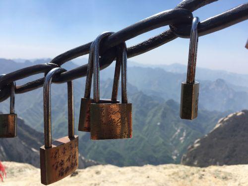 pinus armandii the chains lock