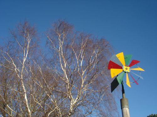 pinwheel birch sky