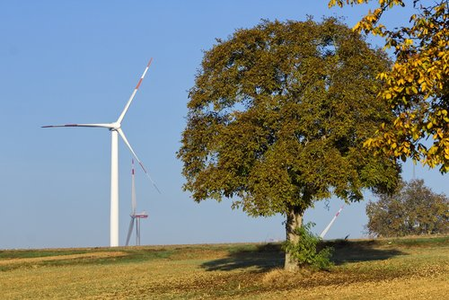 pinwheel  tree  wind energy