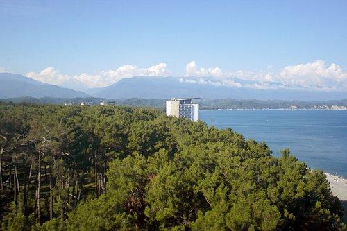 pitsunda  abkhazia  pine