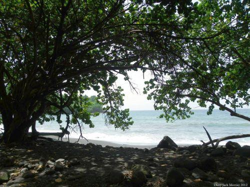 Shaded Beach