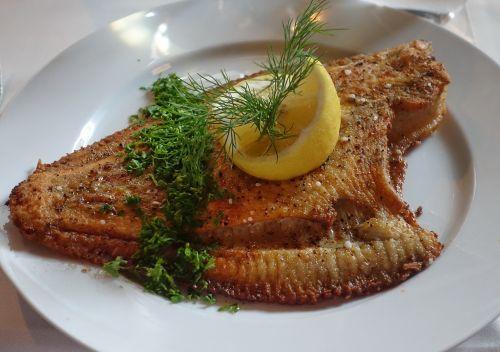 plaice fish flatfish