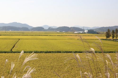 plain ch rice paddies