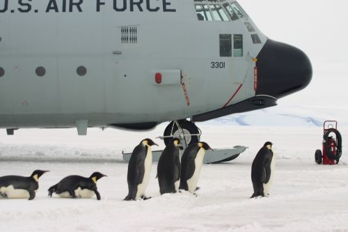 plane penguins boarding