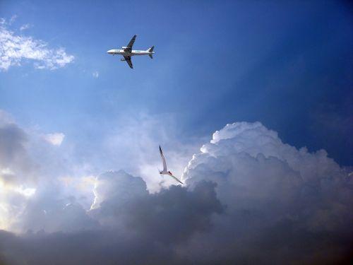 plane aviation airport