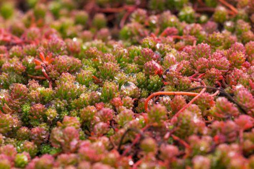 plant nature rain