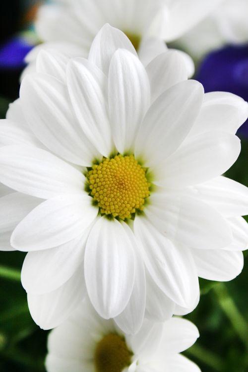 plant flower white