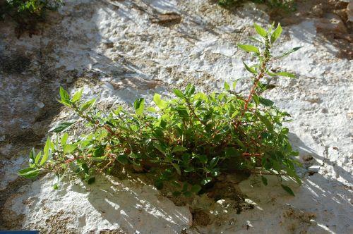 plant pierre rockery
